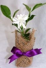 Маленькие цветы – подарки для гостей на свадьбе