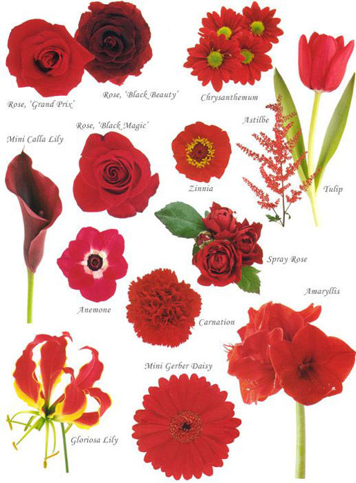 свадьба в красном цвете летом